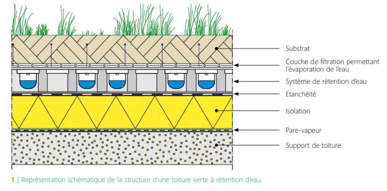 CSTC-schema-structure-toiture-verte-a-retention-eau